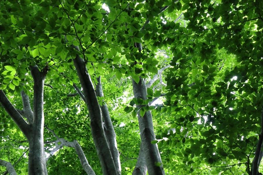 異形樹の森38