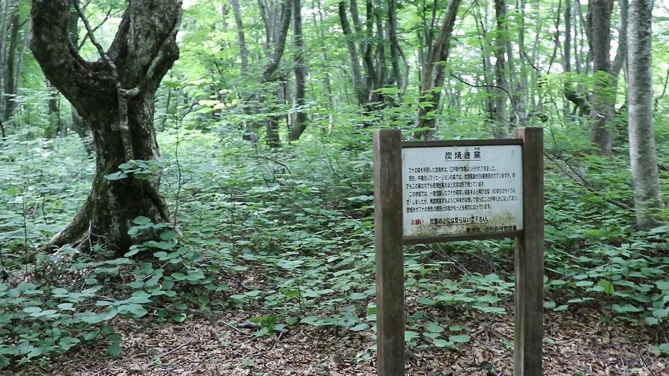 異形樹の森41