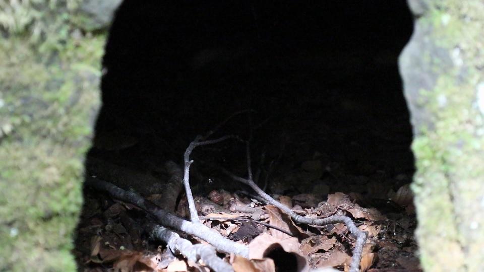 異形樹の森40