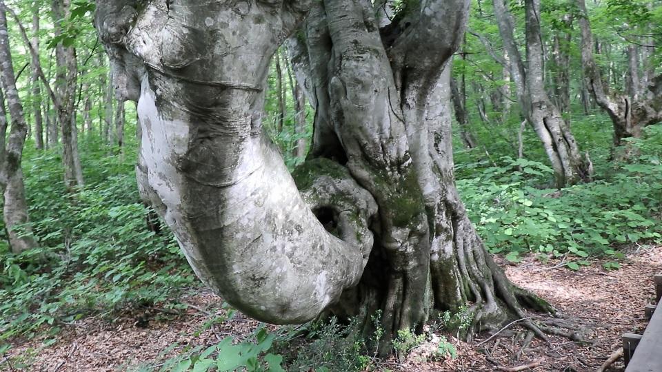 異形樹の森39
