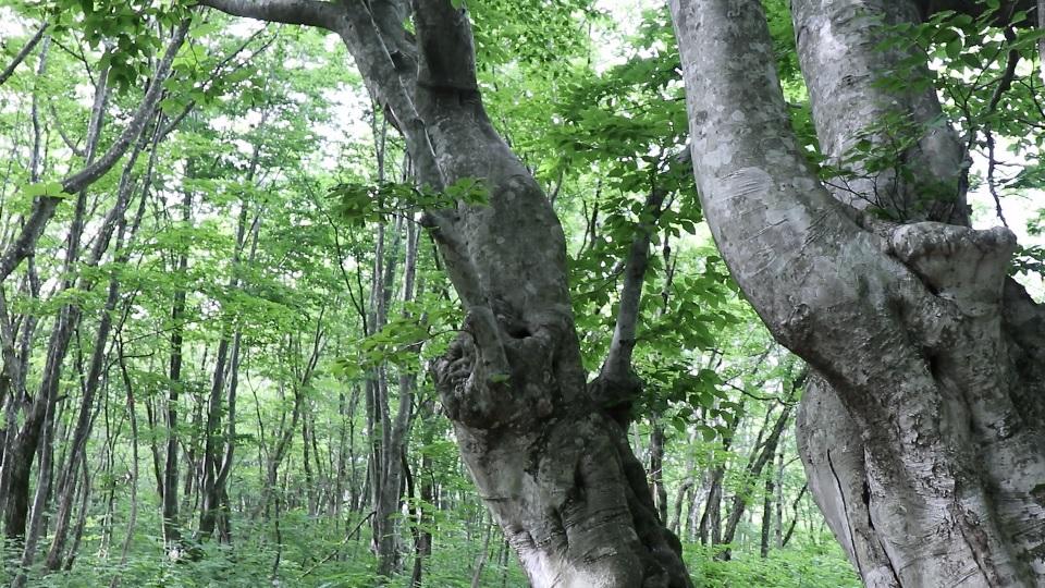 異形樹の森45