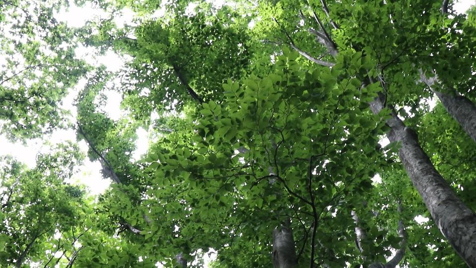 異形樹の森44