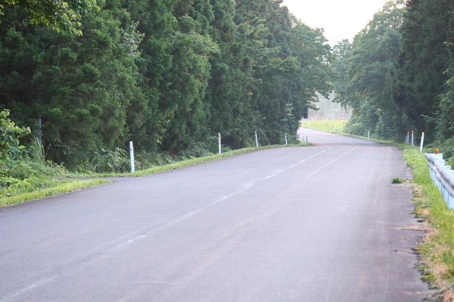 森の帰り道9