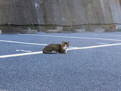 21日のお散歩中の・・・、ネコ発見。
