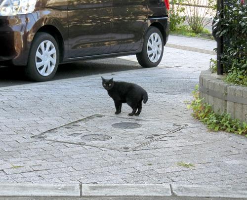 11日の、ネコ発見。 その4。 また別のクロネコだよ。