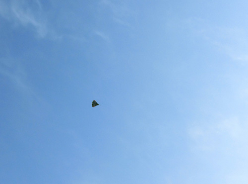 ナゾの、飛行中~! その3。