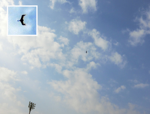 2機目の無尾翼機、飛行ちう~。 その3!