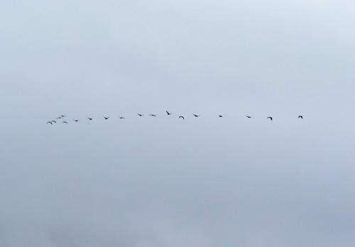 ホテルの窓から、その2。渡り鳥!