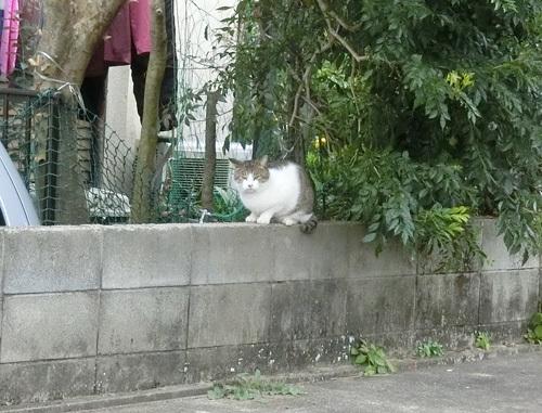 6日のお散歩で、ネコ発見