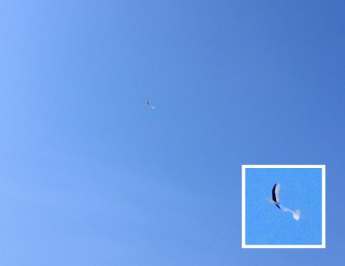 kh-19、飛んでるトコ。 その1!
