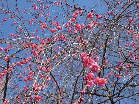きれぎれの風彩 「花の丘農林公苑」190302-2