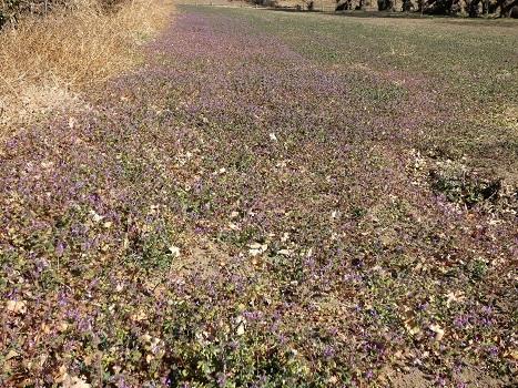 きれぎれの風彩 「花の丘農林公苑」190302-7