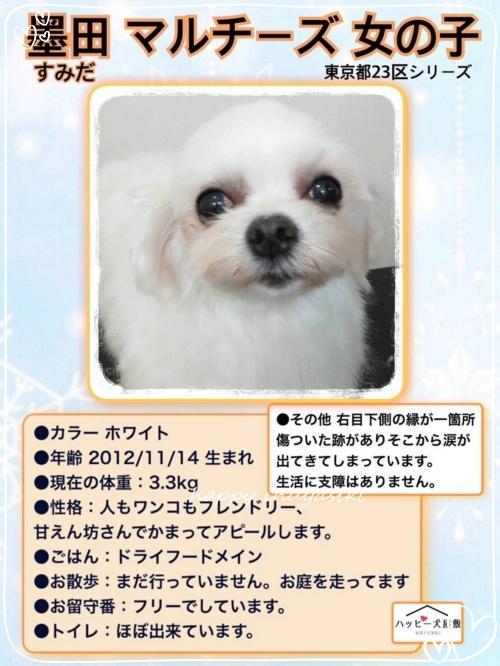 mini20182019第2回ふれあい会in小豆沢_190219_0050