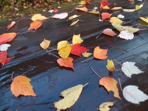テーブルの上に色づいた落ち葉