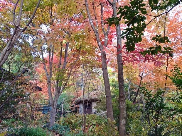 石積みの家の紅葉