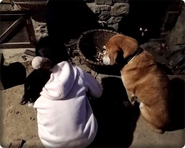 何してる?女の子と犬