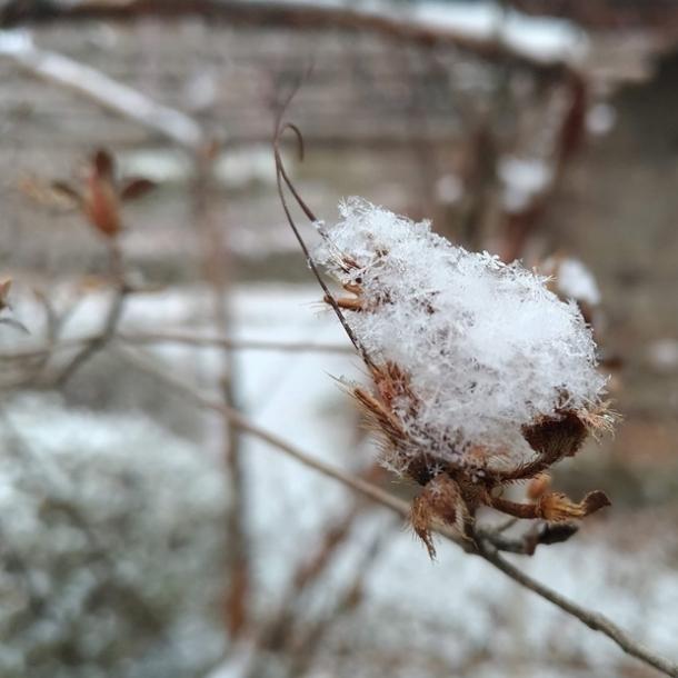 サラッサラの雪