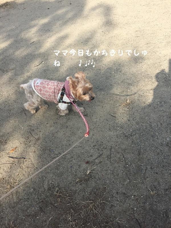 1月8日の散歩 033