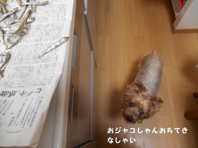 DSCN8792.jpg