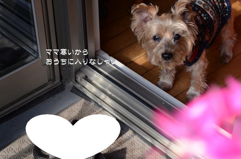DSC_7874.jpg