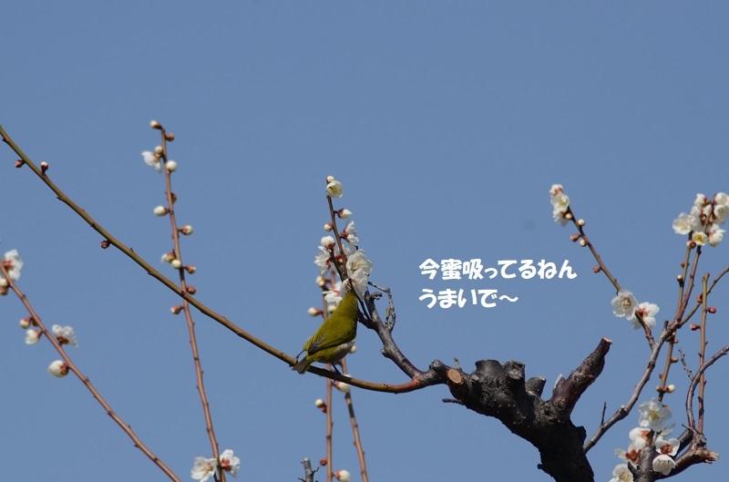 DSC_7988.jpg