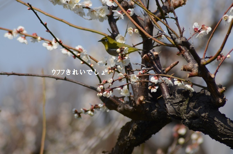 DSC_7996.jpg