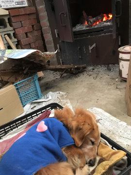 薪割り横とピザ窯前6