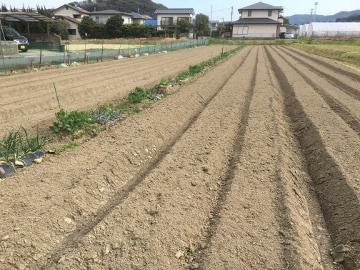 31年度農園準備4