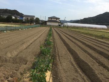 31年度農園準備5