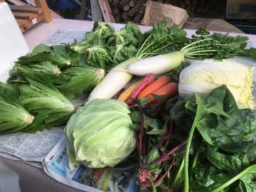 野菜と花餅送りました7。