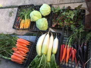 野菜と花餅送りました8。