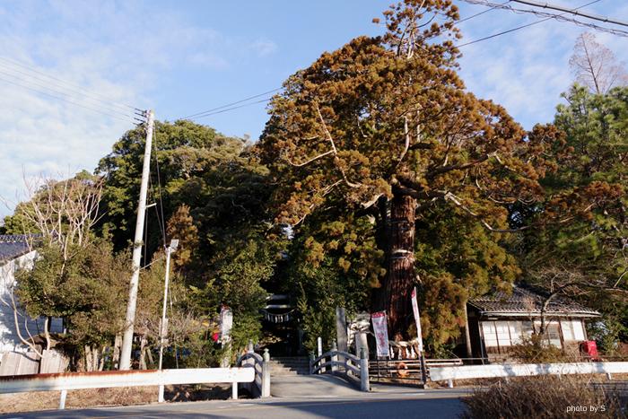大國魂神社にて「初音祭」が執り行われました! [平成31年1月18日(金)更新]1