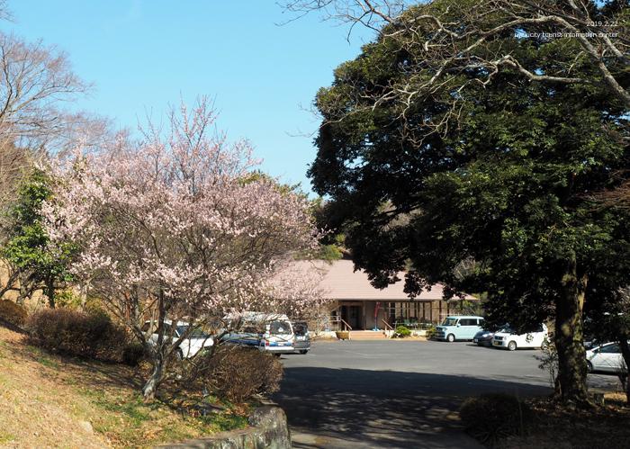 梅香る季節となりました!喜楽苑・梅林寺で梅が開花しています [平成31年2月23日(土)更新]1