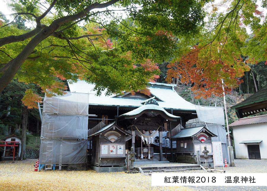 紅葉情報2018 温泉神社 [平成30年11月15日(水)更新]