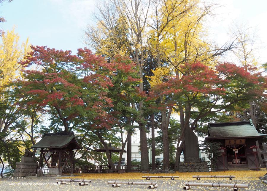 紅葉情報2018 温泉神社 [平成30年11月15日(水)更新]10