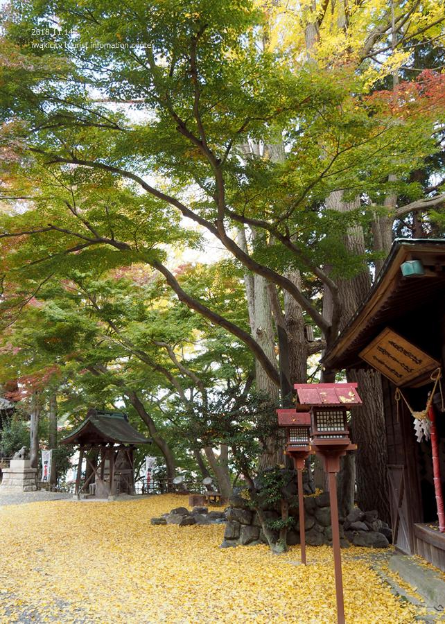 紅葉情報2018 温泉神社 [平成30年11月15日(水)更新]13