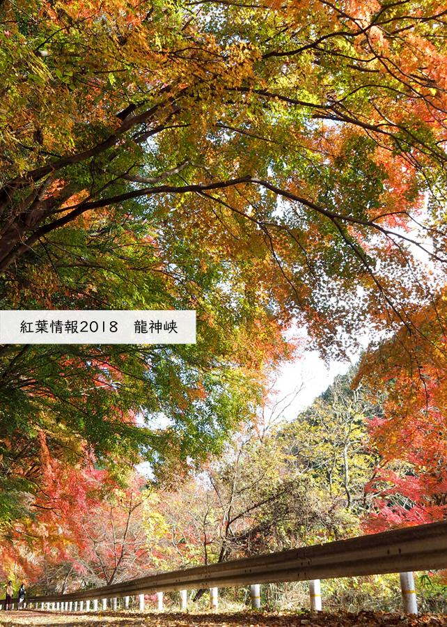 紅葉情報2018 龍神峡 [平成30年11月30日(金)更新]トップ