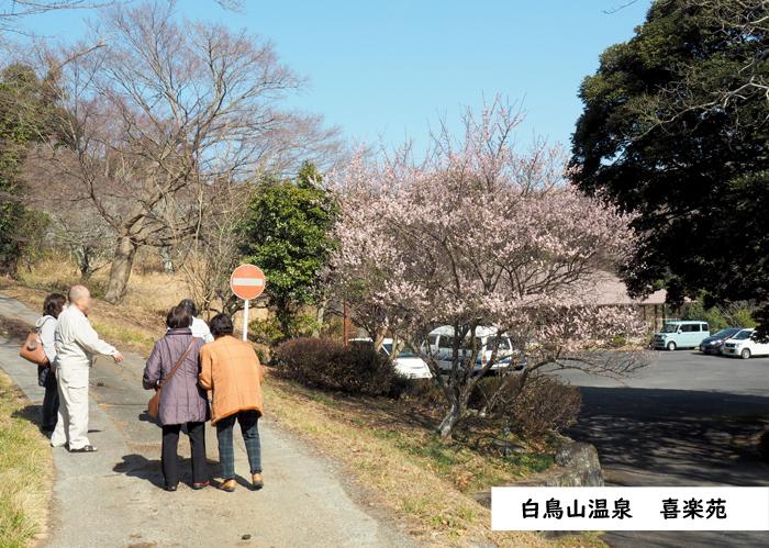 梅香る季節となりました!喜楽苑・梅林寺で梅が開花しています [平成31年2月23日(土)更新] 喜楽苑