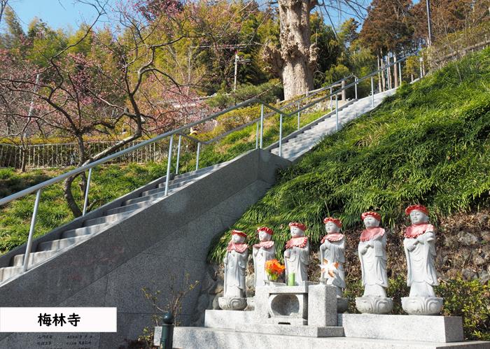 梅香る季節となりました!喜楽苑・梅林寺で梅が開花しています [平成31年2月23日(土)更新] 梅林寺