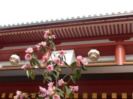 椿 と 飛鳥乃温泉 2