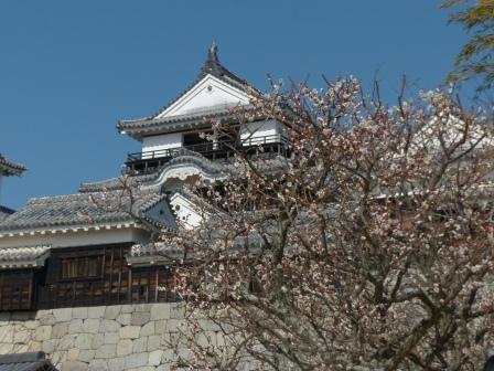 松山城・天守閣 と 梅 1