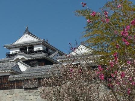 松山城・天守閣 と 梅 2