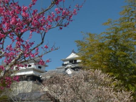 松山城・天守閣 と 梅 3