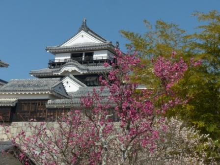 松山城・天守閣 と 梅 7