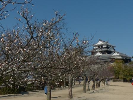 松山城・天守閣 と 梅 8