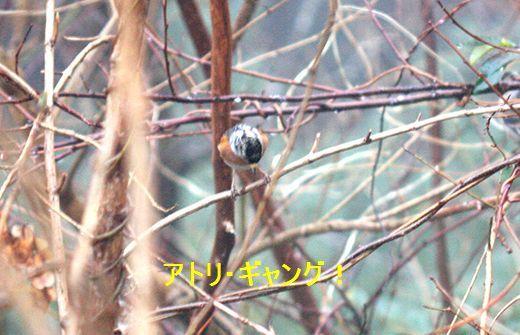 IMG_9278___.jpg