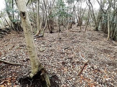 難波江城跡の踏査 (11)