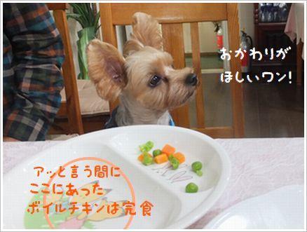 ボクのディナーは?