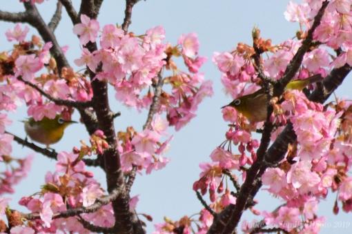19-03-04-H05.jpg