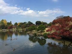 熊本の旅-阿蘇5-201811水前寺公園2